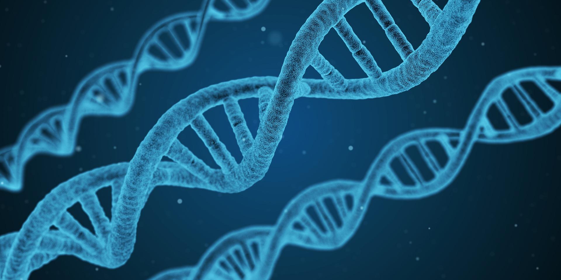 DNA gener mutation genetik sygdom