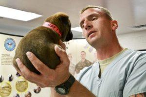dyrlæge hund hundehvalp